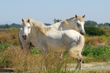 The Beauty and Freedom of Camargue