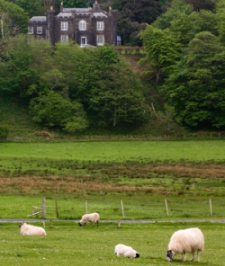 Scotland_with_Sheep