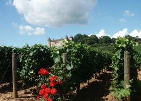 Vineyard_in_France